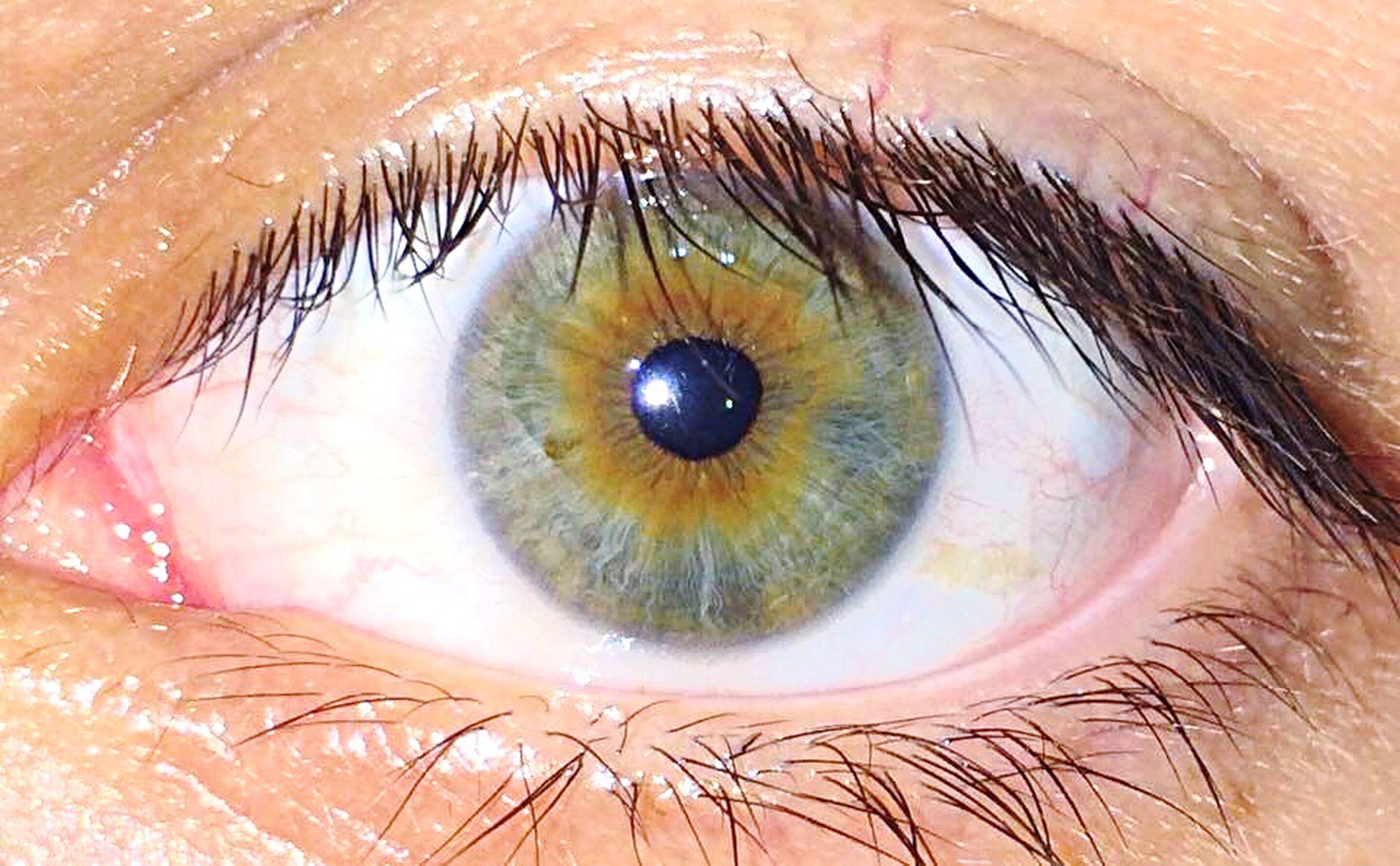human eye, eyelash, full frame, eyesight, close-up, sensory perception, backgrounds, staring, extreme close-up, part of, person, looking at camera, extreme close up, beauty, eyeball, green eyes, make-up, human skin, iris - eye, focus on foreground, eyeshadow, eyebrow, vision