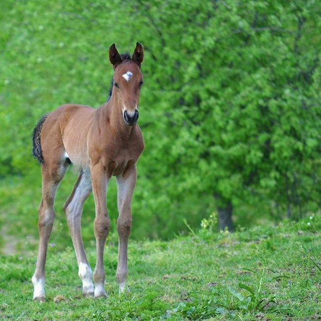 🌿🌳🐴🌳🌿 Foal Filly Horse Racehorse Stable Equine Forest Tree Trees Tagsforlikes Baby Equestrian Black Green Run Landscape Nature Animal Animals Horses Gopro Beauty Throughbred