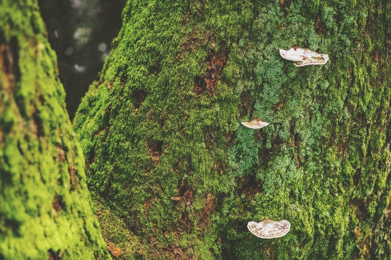 EyeEm Nature Lover Non-urban Scene Tree Fungus Green Growing Freshness Vibrant Color Outdoors Botany Nature Green Color Moss Fragility Day Beauty In Nature Tree Trunk Close-up at Margretetorp Ängelholm Sweden