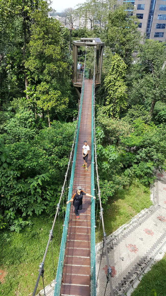 canopy walk at Bukit Nanas Canopy Walk Casual Clothing Day Forest Grass Green Color Growth Leisure Activity Lifestyles Lush Foliage Nature Outdoors Plant Sky Suspension Bridge The Way Forward Tree
