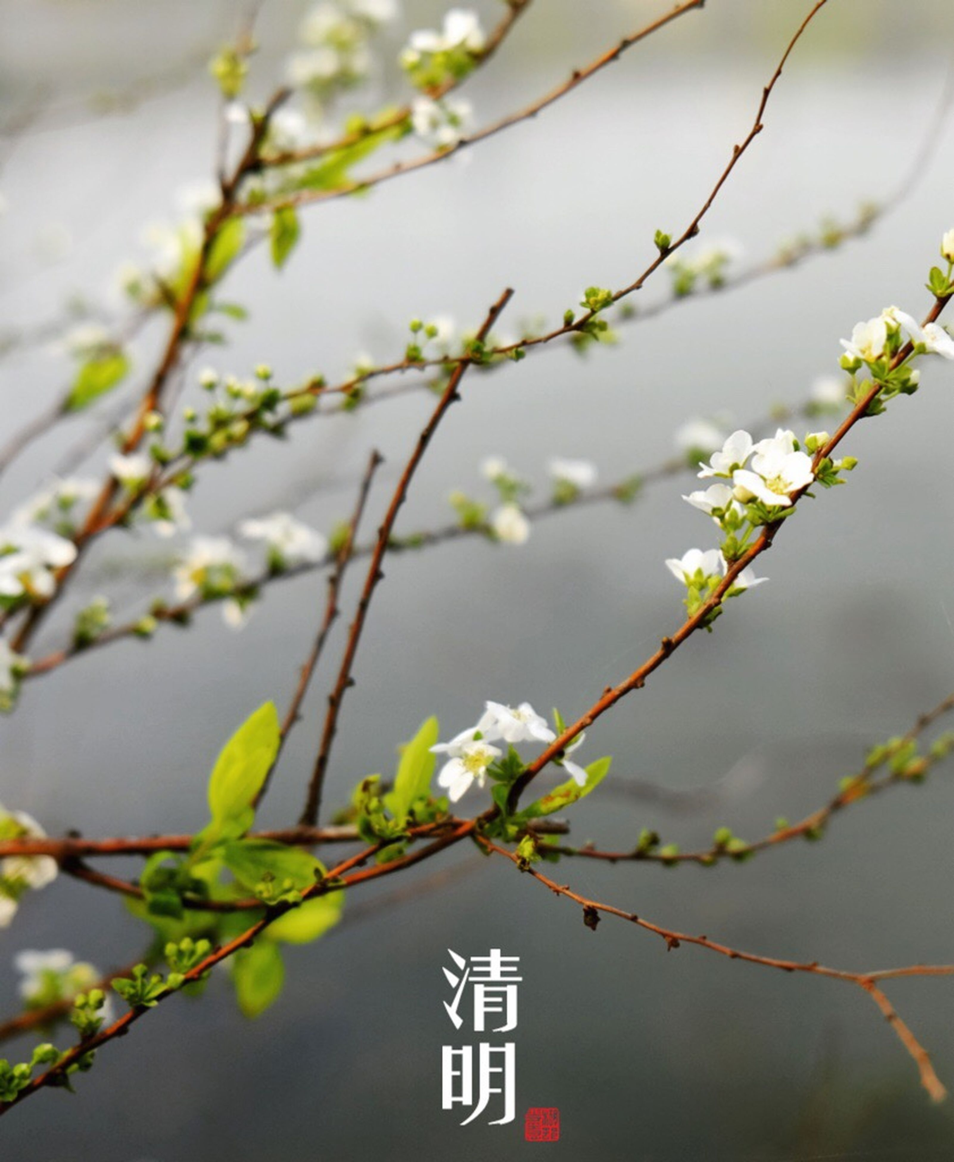 focus on foreground, text, branch, close-up, tree, communication, leaf, western script, growth, nature, day, plant, outdoors, no people, twig, low angle view, selective focus, white color, beauty in nature, sky