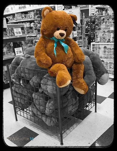 """Think outside the box"". 11/120. Teddy Bear Outside The Box Toysrus Blue Ribbon Overflowing EyeEmNewHere Break The Mold"