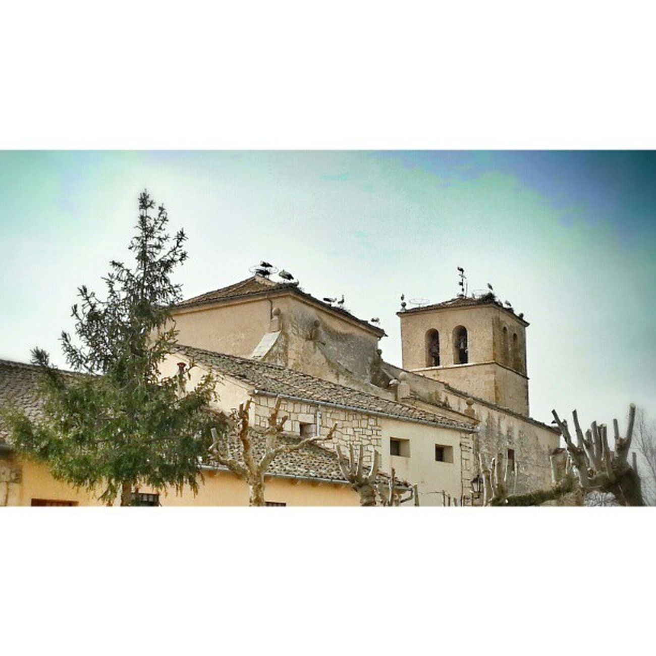 Matabuena Cigüeñas Campanario Segovia Segoviaisdifferent