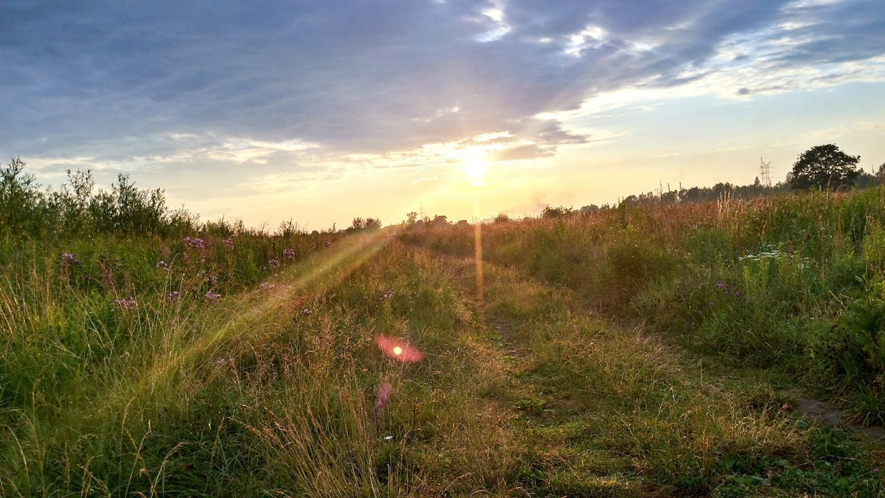 sky, nature, sunset, growth, beauty in nature, cloud - sky, scenics, tranquility, outdoors, no people, tranquil scene, grass, field, tree, landscape, plant, day