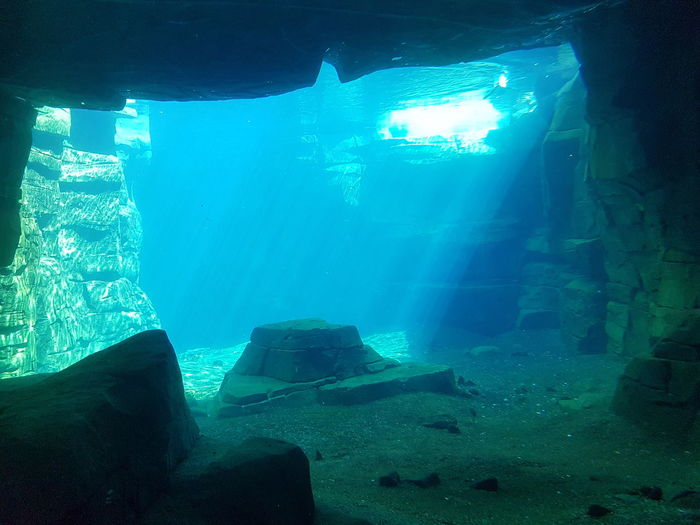 Water Underwater Aquarium Nature Blue Sun Sunlight Bright Beautiful Suninwater Shiny