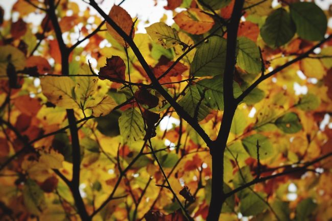 Focus Object Maximum Closeness Leaf Change Nature Autumn Outdoors Close-up Tree Beauty In Nature Autumn Colors Trees Autumn Outdoor Photography Exploring EyeEm Gallery Eye4photography  Taking Photos Nature_collection Leaves Beauty In Nature Lookingup