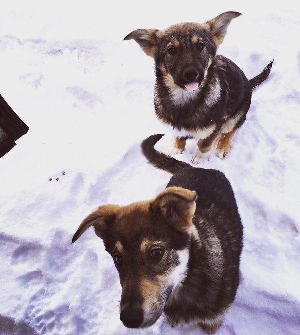 Litledog Brothers Dogs Streetdogs