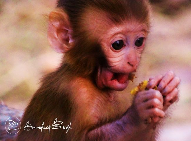 The Innocent Wild.. Young Wild And Free(; Artic Monkeys Monkey Love The Great Outdoors - 2015 EyeEm Awards The Moment - 2015 EyeEm Awards