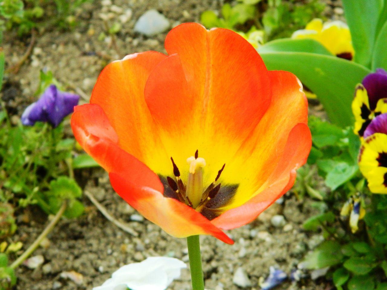 Close-Up Of Orange Flower Growing On Field