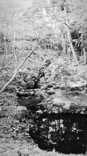 Place Of Scenic Beauty Tonogayato Teien 1913-15 Eguchi Teijo (VP of Manchurian Railway and senior director at mitsubishi)1929 purchased by founder of Mitsubishi, Iwasaki Yataro. In 1974 it was purchased by the Tokyo Govt and in 1979 , it was opened to the public. Cliff Waterfall Natural Spring Bamboo Forest Wisteria Canopy Tokyo Japan