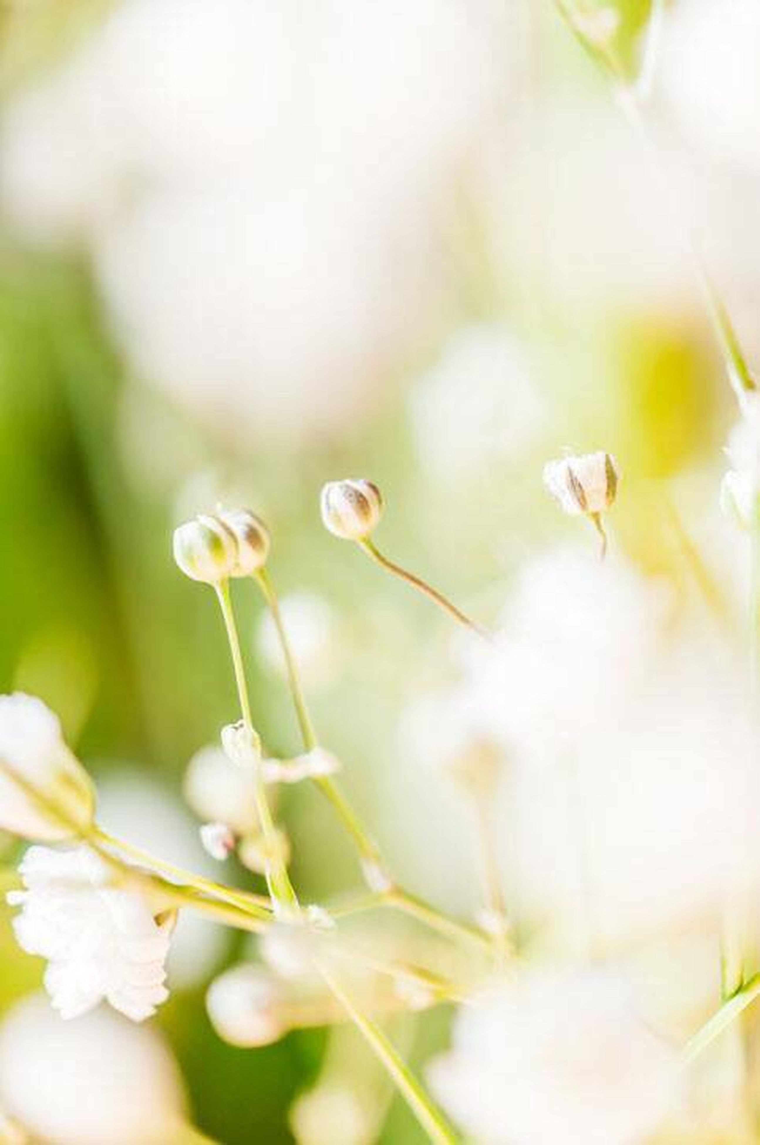 flower, growth, freshness, fragility, focus on foreground, close-up, beauty in nature, petal, nature, selective focus, plant, flower head, white color, stem, blooming, bud, blossom, in bloom, botany, springtime