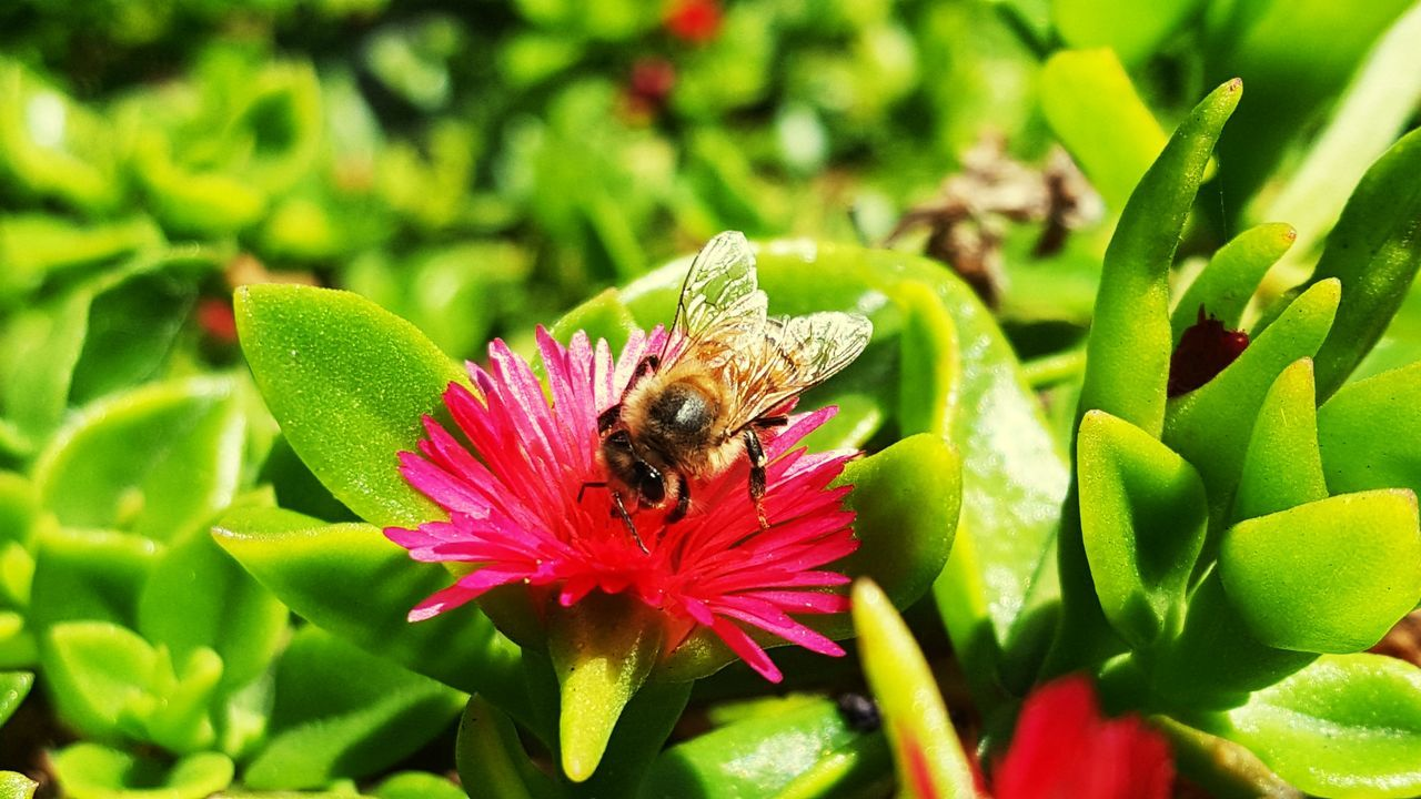insect, one animal, animal themes, animals in the wild, nature, bee, flower, green color, growth, wildlife, animal wildlife, petal, beauty in nature, pollination, plant, fragility, no people, symbiotic relationship, day, freshness, close-up, outdoors, flower head, leaf