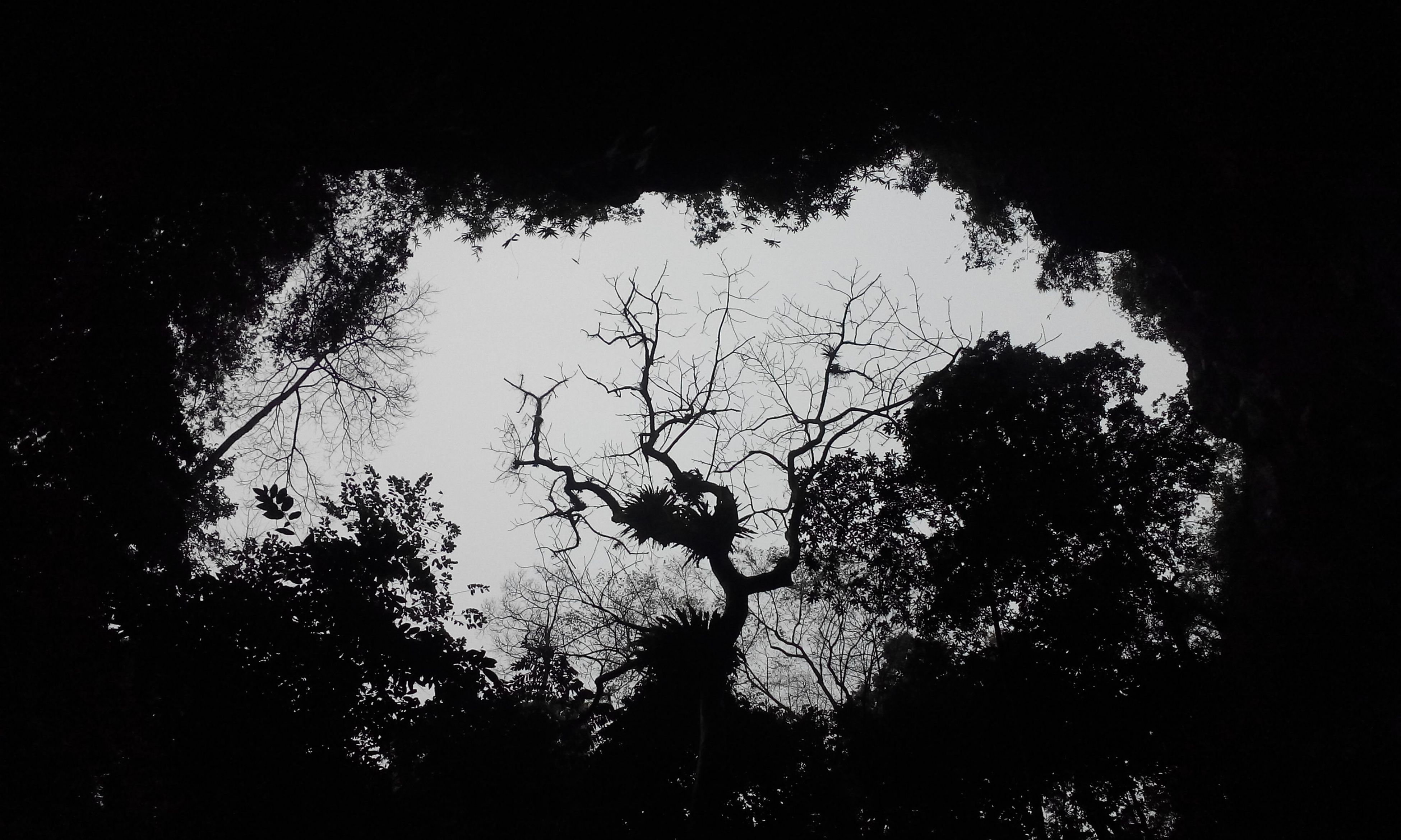 HuongTichCave Darkness And Light Enjoying The View Tree And Sky Lookingup