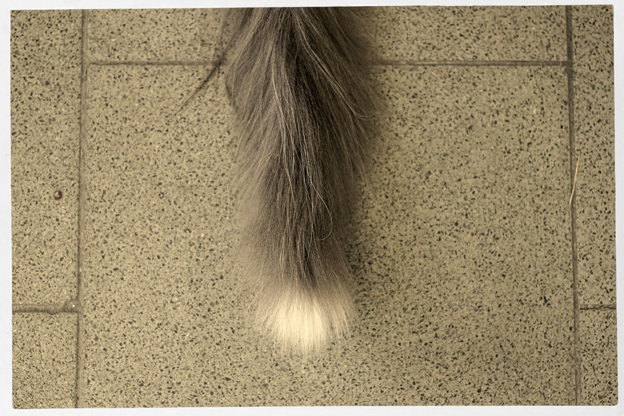High Angle View Of Cat Tail On Floor