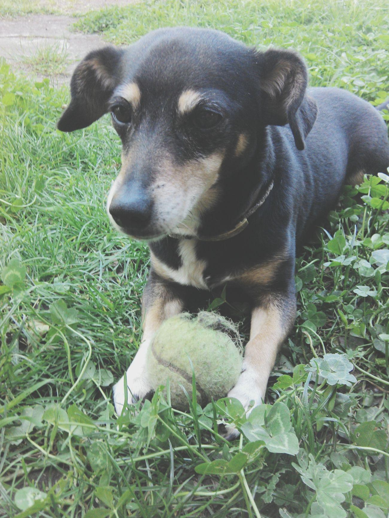 Mon chien ? Dans doute le beau beau du monde! Depuis toute petite je l'ai avec moi, personne ne pourras me l'enlevé. :3
