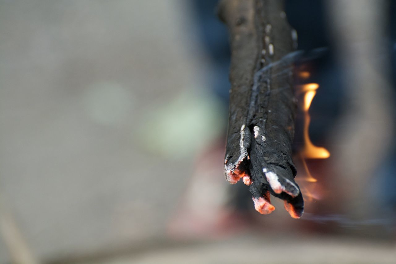 Beautiful stock photos of fire, Burning, Close-Up, Detail, Fire