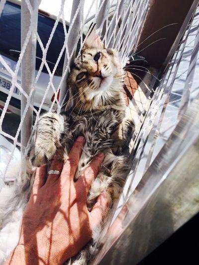 Brazil That's Me Hello World Brasil ♥ I Love My Cats  I Love My Cat Lovecats❤️ Cats Cat Cat♡