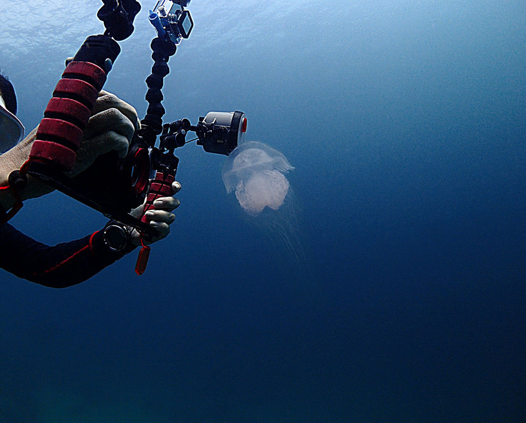 Get the shot Adventure Camera - Photographic Equipment Extreme Sports Jelly Fish Jellyfish Lifestyles One Person Outdoors Real People Scuba Diving Underwater Underwater Camera Underwater Photography Water
