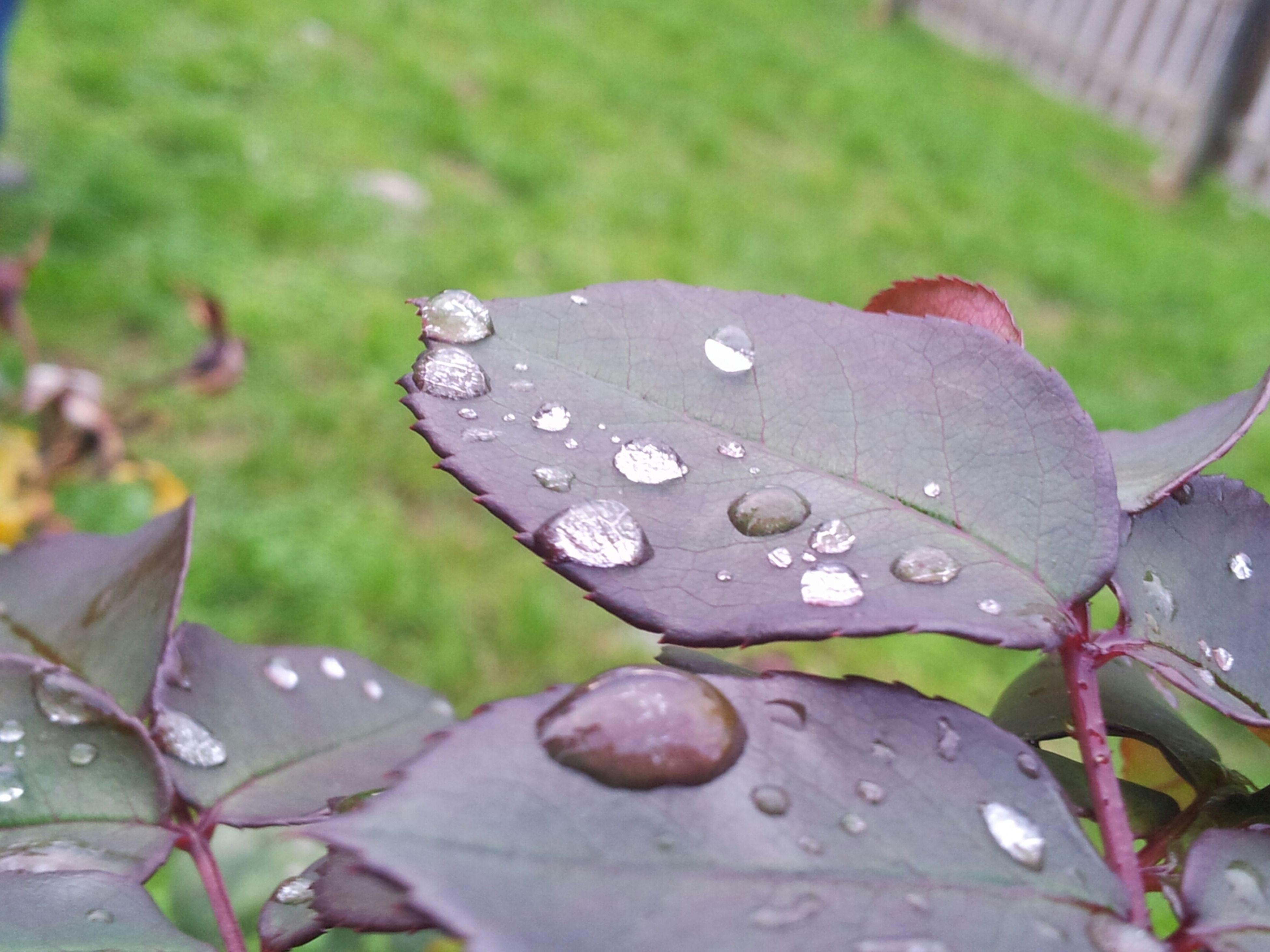 drop, leaf, water, wet, freshness, growth, close-up, fragility, beauty in nature, nature, plant, focus on foreground, flower, dew, raindrop, green color, season, petal, selective focus, rain