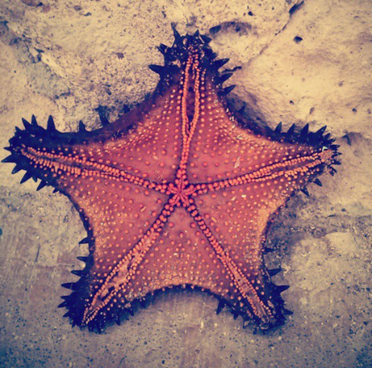 One Animal Sea Life Sea Nature No People Animal Themes Close-up Beach Underwater Water UnderSea Day Outdoors Sand And Sea Starfish  Starfish At Beach