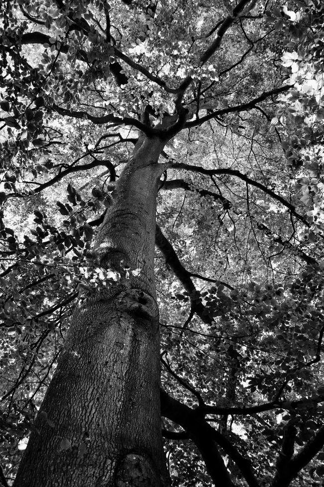 Majestic 😌 EyeEm Nature Lover Nature Streamzoofamily Nikon Nikonphotography Monochrome Monoart Blackandwhite