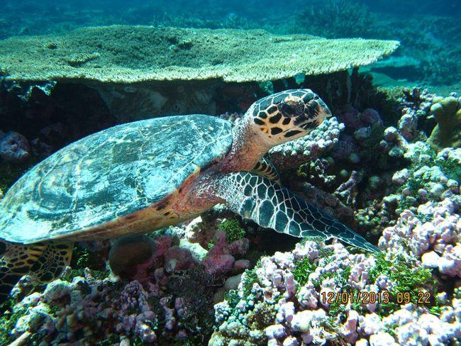 Lovinginthemoment Best Day Ever Undersea Holiday Sea
