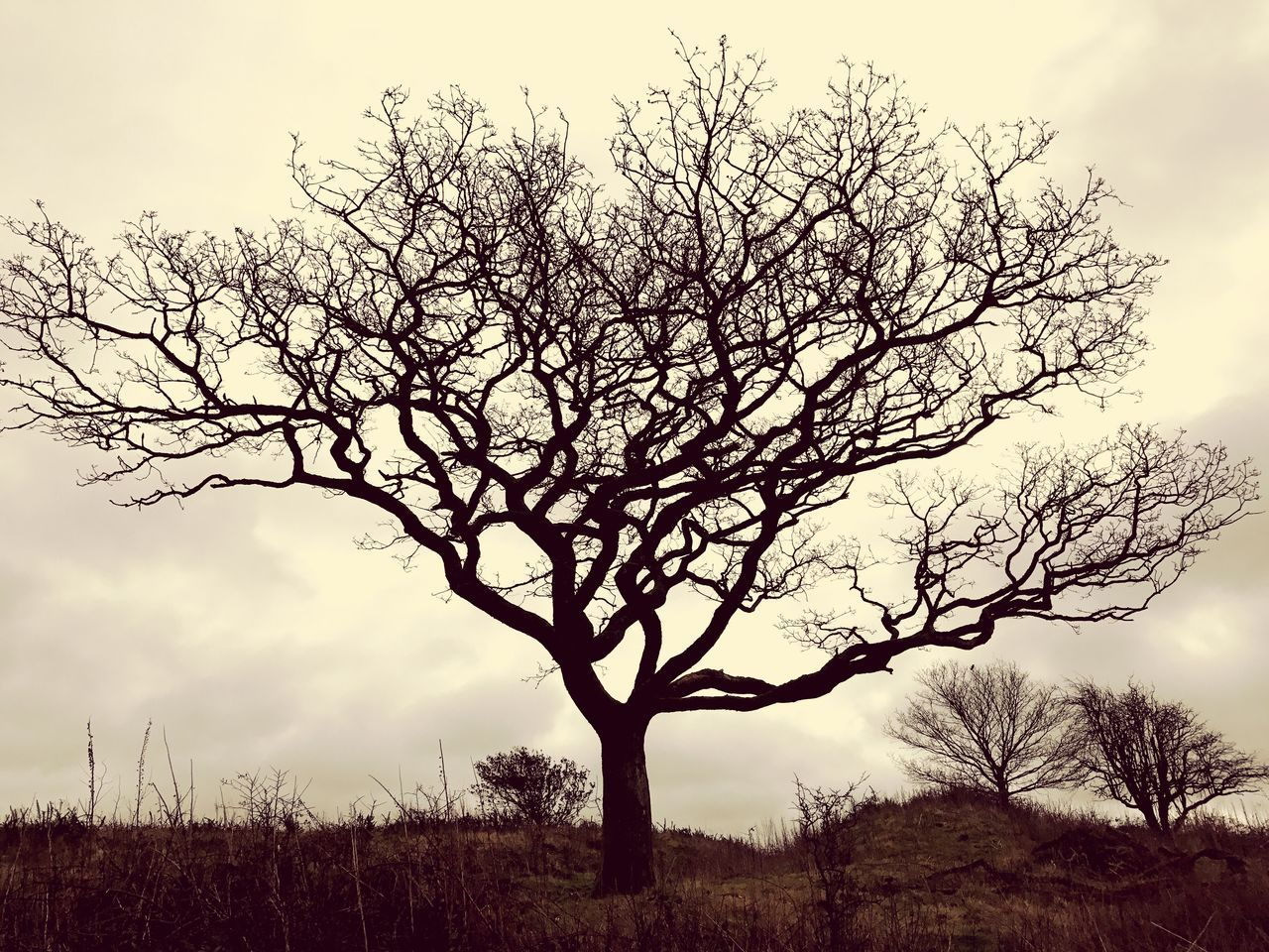 The lonely tree Nature Tree Tranquility Landscape Bare Tree Beauty In Nature No People Branch Tranquil Scene Sky Lone Outdoors Growth Scenics Isolated Day