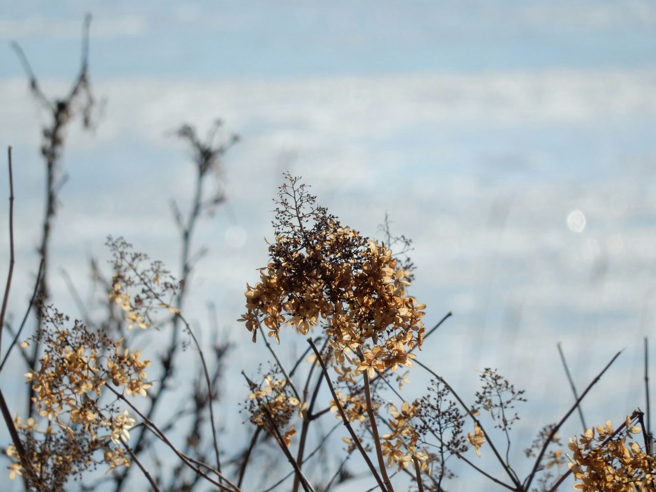 nature, beauty in nature, plant, no people, growth, winter, flower, outdoors, water, day, focus on foreground, snow, branch, cold temperature, tree, fragility, close-up, freshness, sky