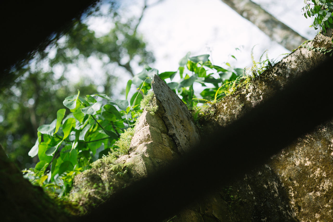 green color, day, no people, leaf, sunlight, tree, outdoors, growth, plant, nature, close-up, beauty in nature, freshness