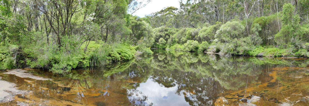 Australia Australian Landscape Bush Green Nature Nature Travel Reflection Reflections In The Water River Serinity Water EyeEmNewHere New South Wales  Australian Bush Travel Photography Outdoors
