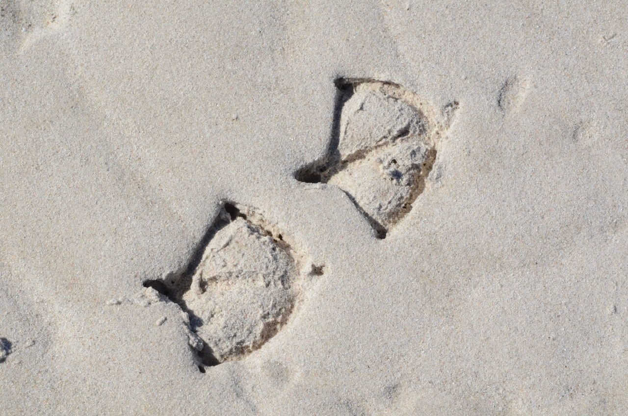 Bird imprints Animal Track Beach Birds Day Drawing - Activity Drawing - Art Product Happiness High Angle View Nature No People Outdoors Paw Print Sand Smiley Face Sunlight Track - Imprint