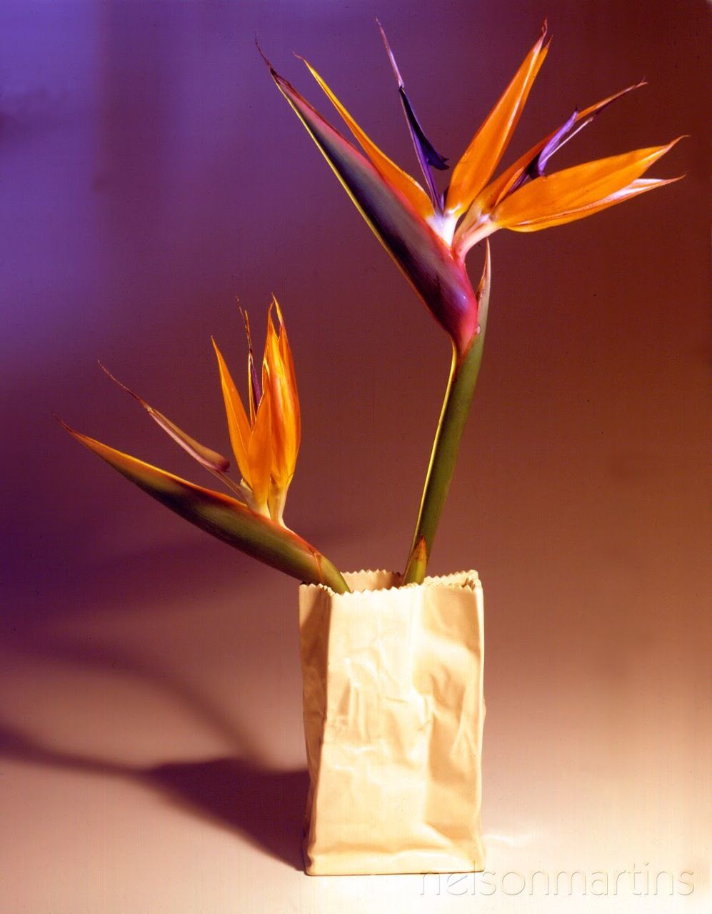 flower, petal, freshness, flower head, fragility, beauty in nature, nature, plant, no people, close-up, blooming, bird of paradise - plant, day, outdoors