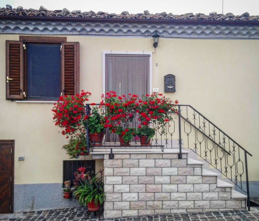 Flower Architecture Multi Colored Built Structure Plant Window Box Building Exterior Door Doors Window Windows Windows And Doors Windowporn Doorporn Stairs Stone Stone Material Stone Architecture Flowers Yellow House Village Village Life Casalciprano Molise