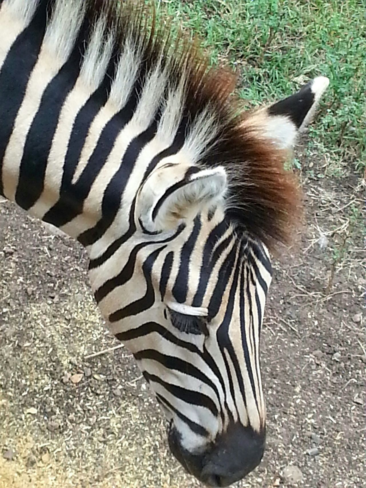 Zebra Nature Closeup Black & White EyeEm_crew EyeEm Best Shots - No Edit