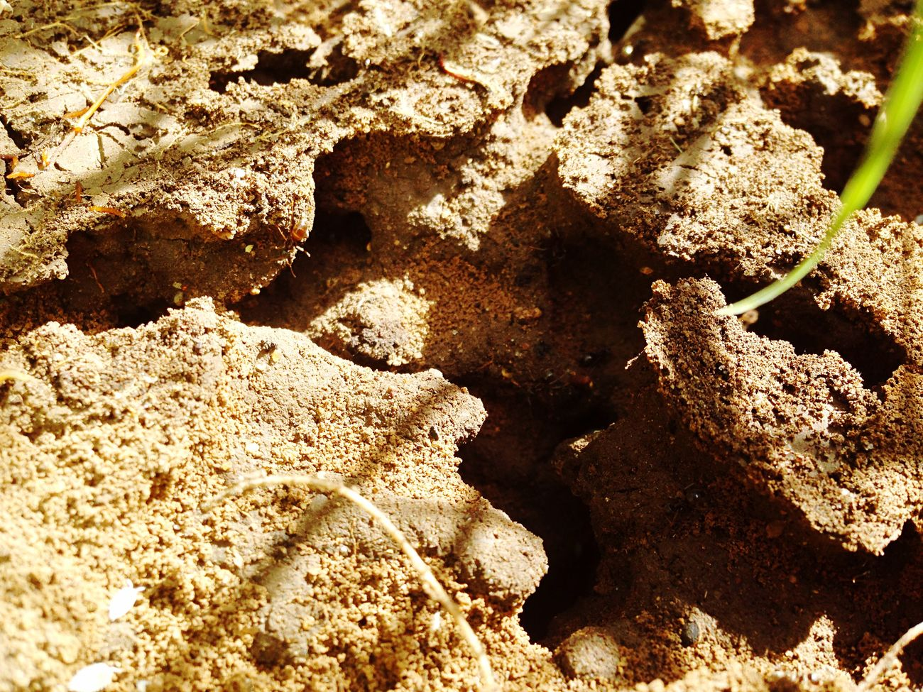Ants Ants Nest Incects Nature