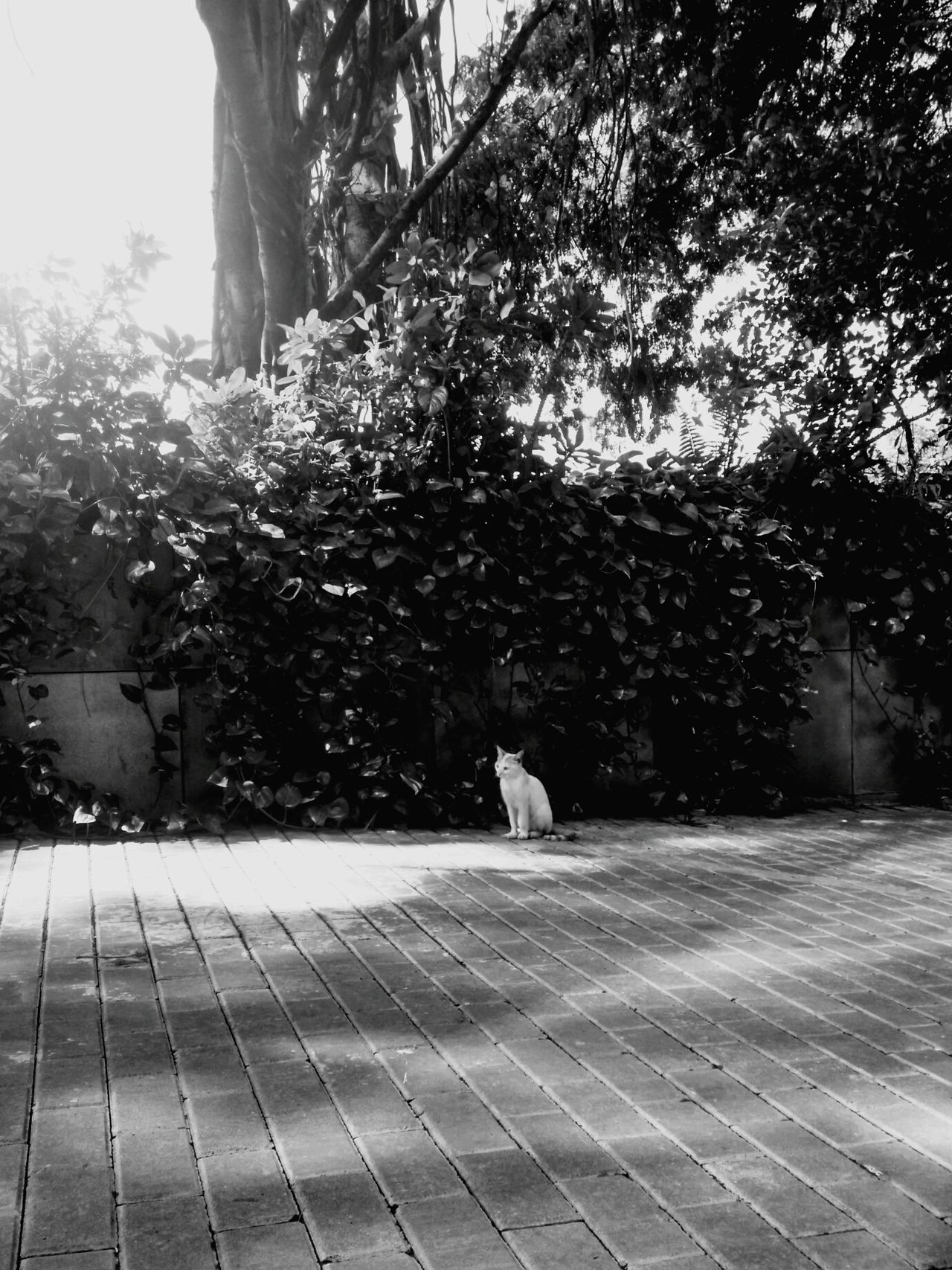 Cats 🐱 Still Life Chill Mode Check This Out Blackandwhitecat EyeEm Nature Lover Eyeem Market Randomshot