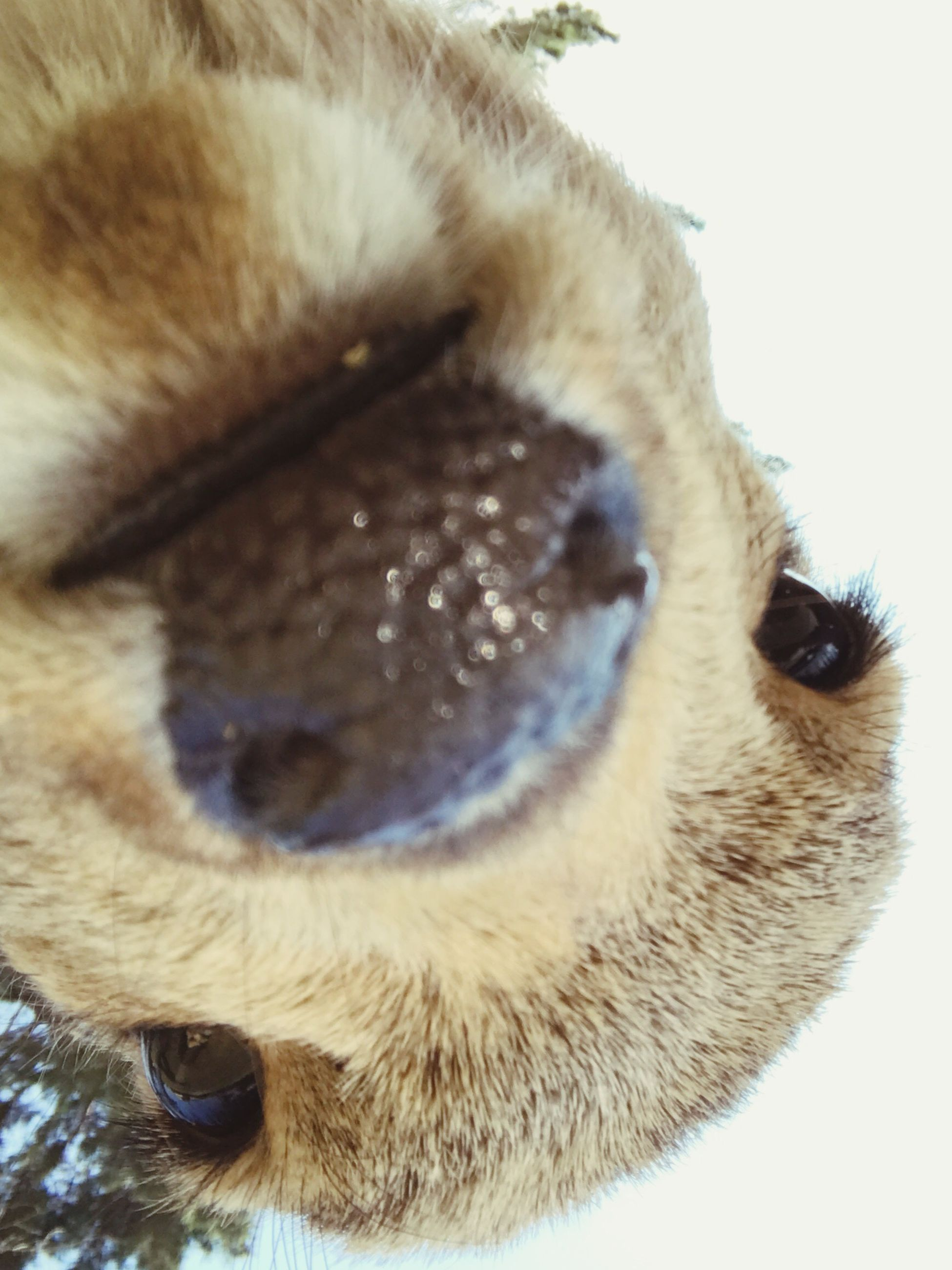 domestic animals, one animal, animal themes, pets, mammal, close-up, no people, dog, day, outdoors