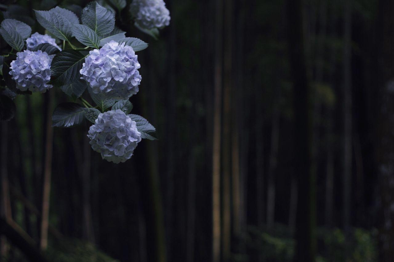 EyeEm Nature Lover Nature_collection Flowerporn Japan フィルターかけると迷うからスッピン 彩度とかいじってたやんさっき うるさい Flower Collection フィルターはかけてない Vscocam 紫陽花 に魅せられた2015梅雨 The Moment - 2015 EyeEm Awards