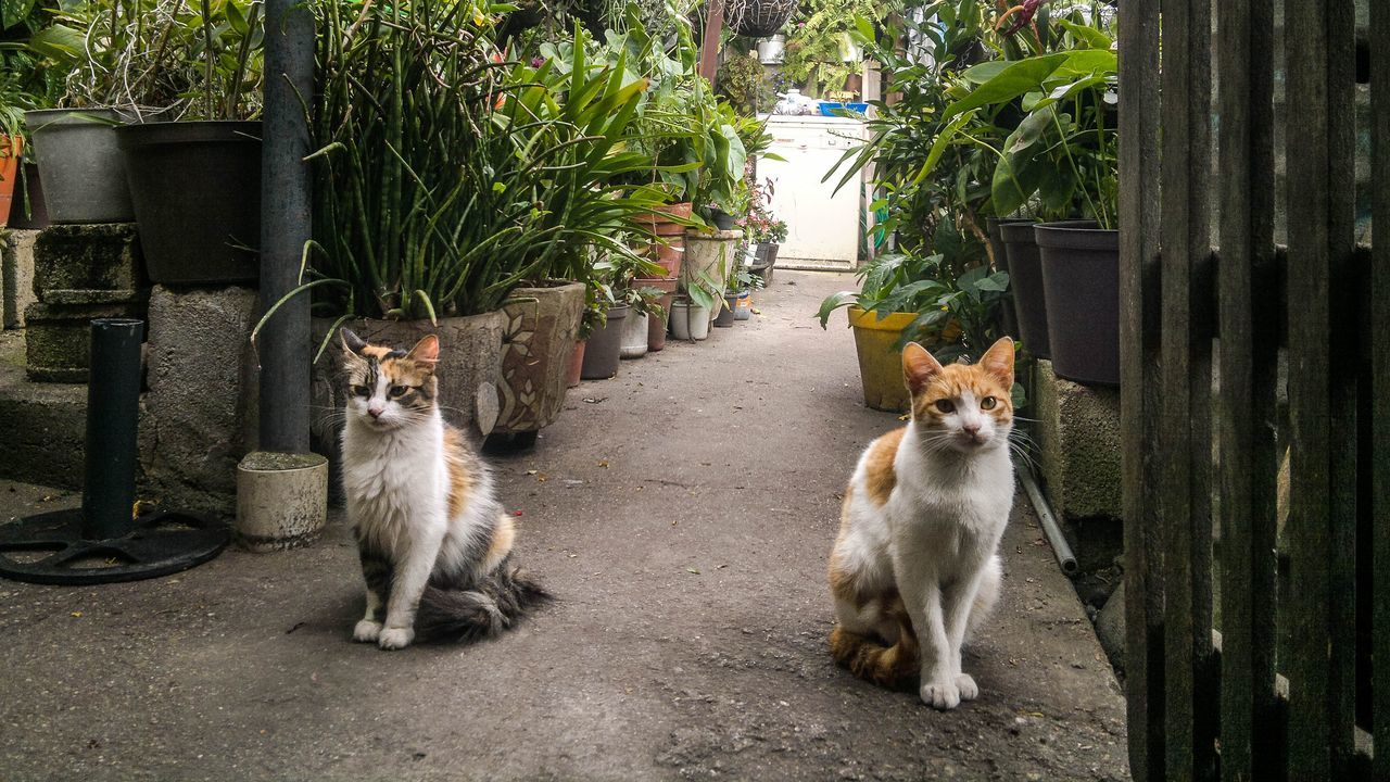 animal themes, domestic animals, pets, domestic cat, day, mammal, looking at camera, outdoors, no people, portrait, plant, feline, sitting, nature