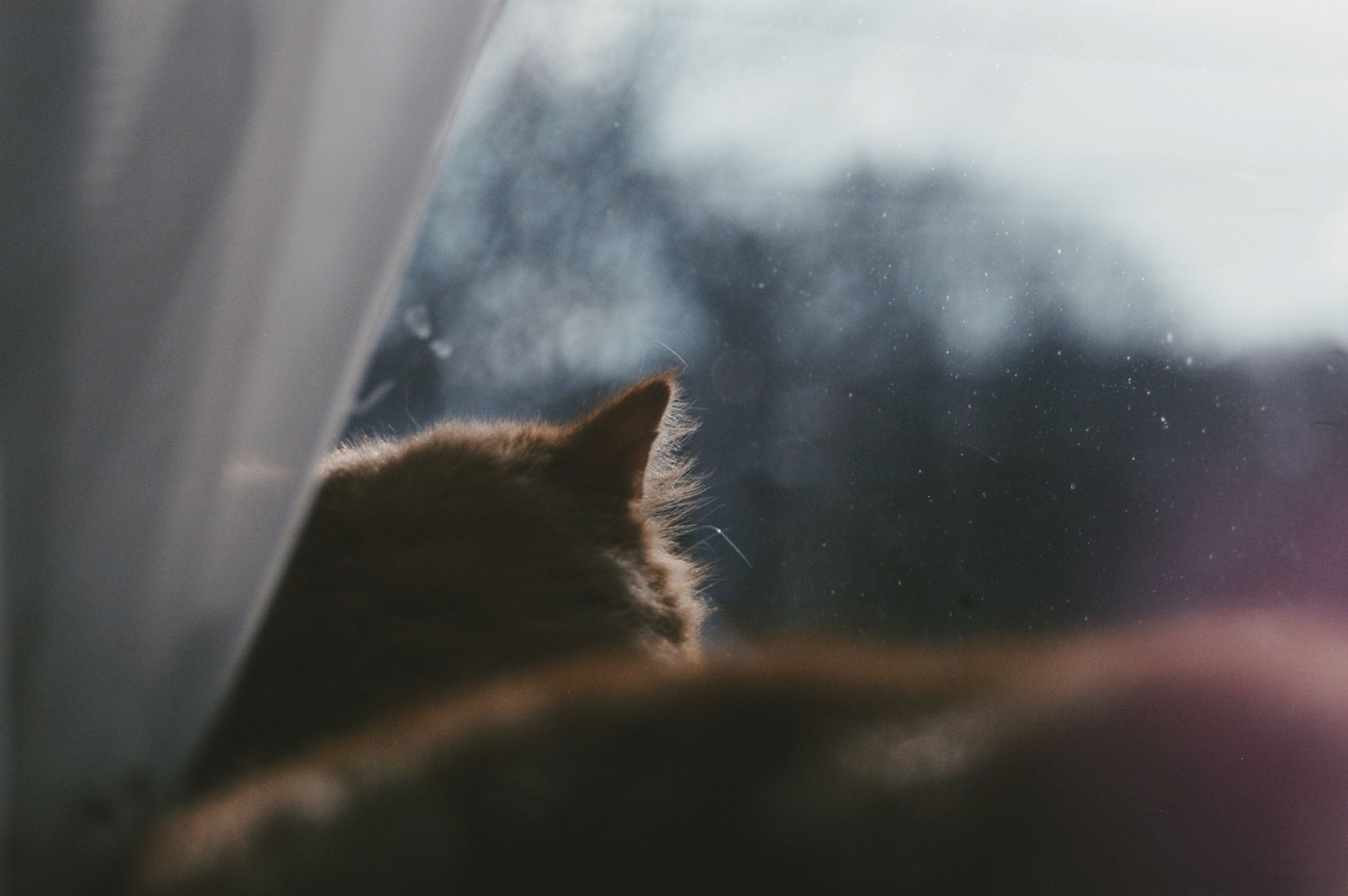 indoors, window, one animal, animal themes, selective focus, close-up, transparent, glass - material, wet, focus on foreground, rain, drop, no people, copy space, looking through window, part of, defocused, nature, weather, day