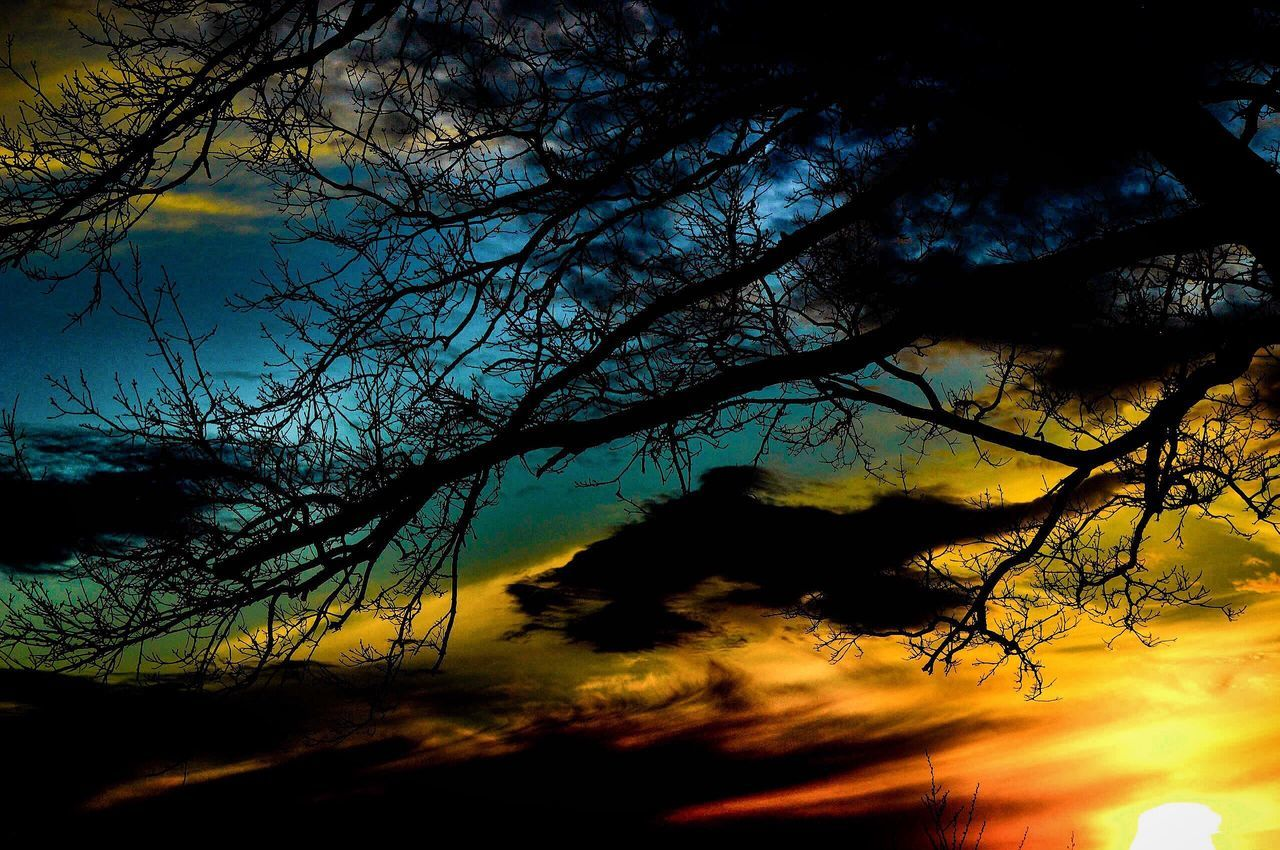 A beautiful rustic vibrant sunset Sky Tree Silhouette Bare Tree Nature Beauty In Nature Branch Tranquility No People Sunset Scenics Cloud - Sky Tranquil Scene Outdoors Day