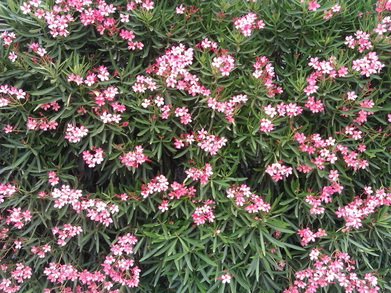 Flowers Flores Belleza Naturaleza.