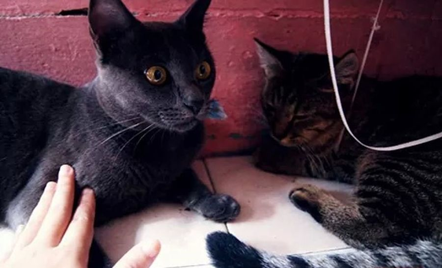Cat Lovers Cat Watching Cat Eyes Shocked Face