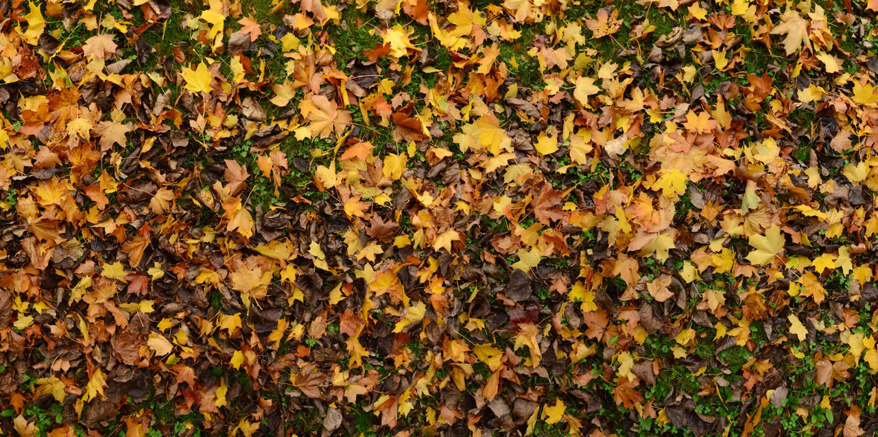 Abundance Autumn Backgrounds Beauty In Nature Change Day Dry Full Frame Leaf Leaf Carpet Leaves Nature Outdoors
