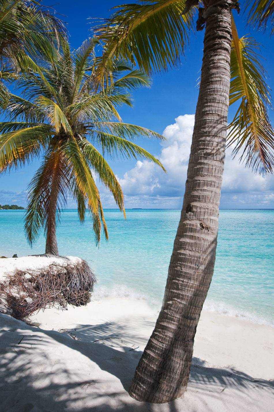 Beautiful stock photos of regenbogen, Beach, Beauty In Nature, Coconut Palm Tree, Day