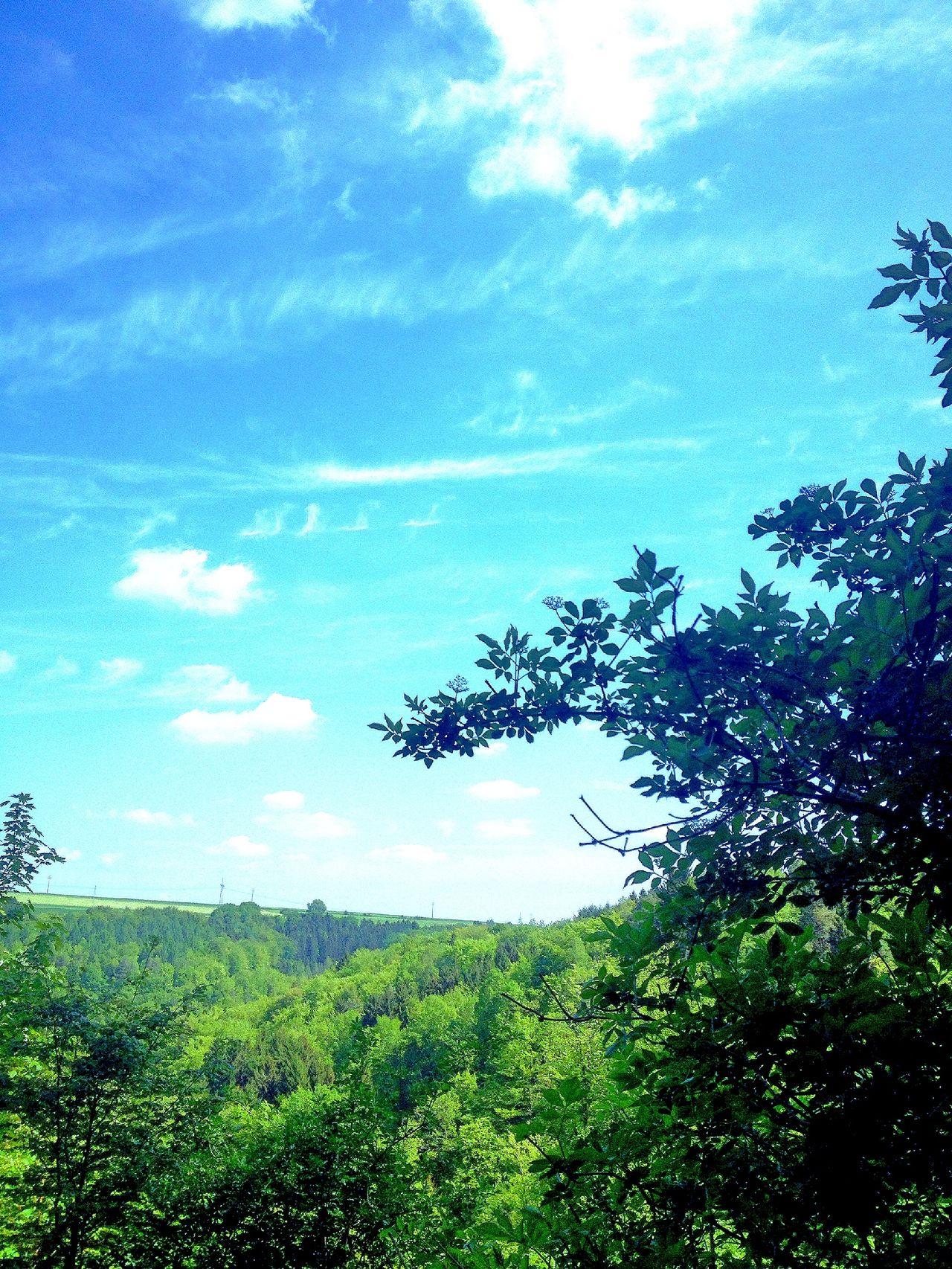 Skyporn Bluesky Hugging A Tree Nature EyeEm Nature Lover Vaddadah