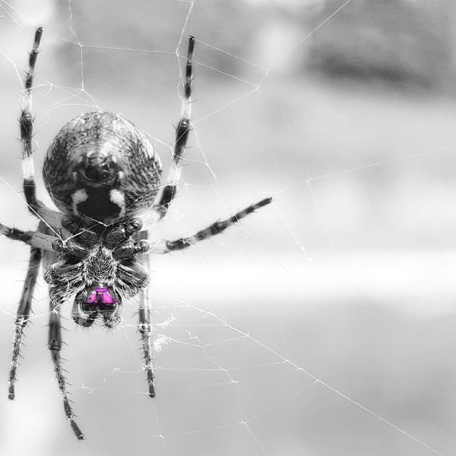 You And Me Against The World EyeEm Gallery Showcase April Eyemphotography EyeEm Best Shots Taking Photos Nature_perfection Hello World Spiders Closeupshot Face To Face Blackandwhite Photography Enjoying Life Black & White Selective Color Spring Daddy Daughter Time