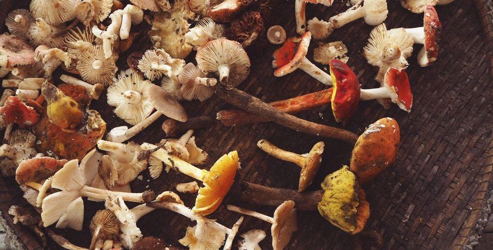 Mushroom Mushroom Country Life Food Vegetable Colors Of Nature Thailand