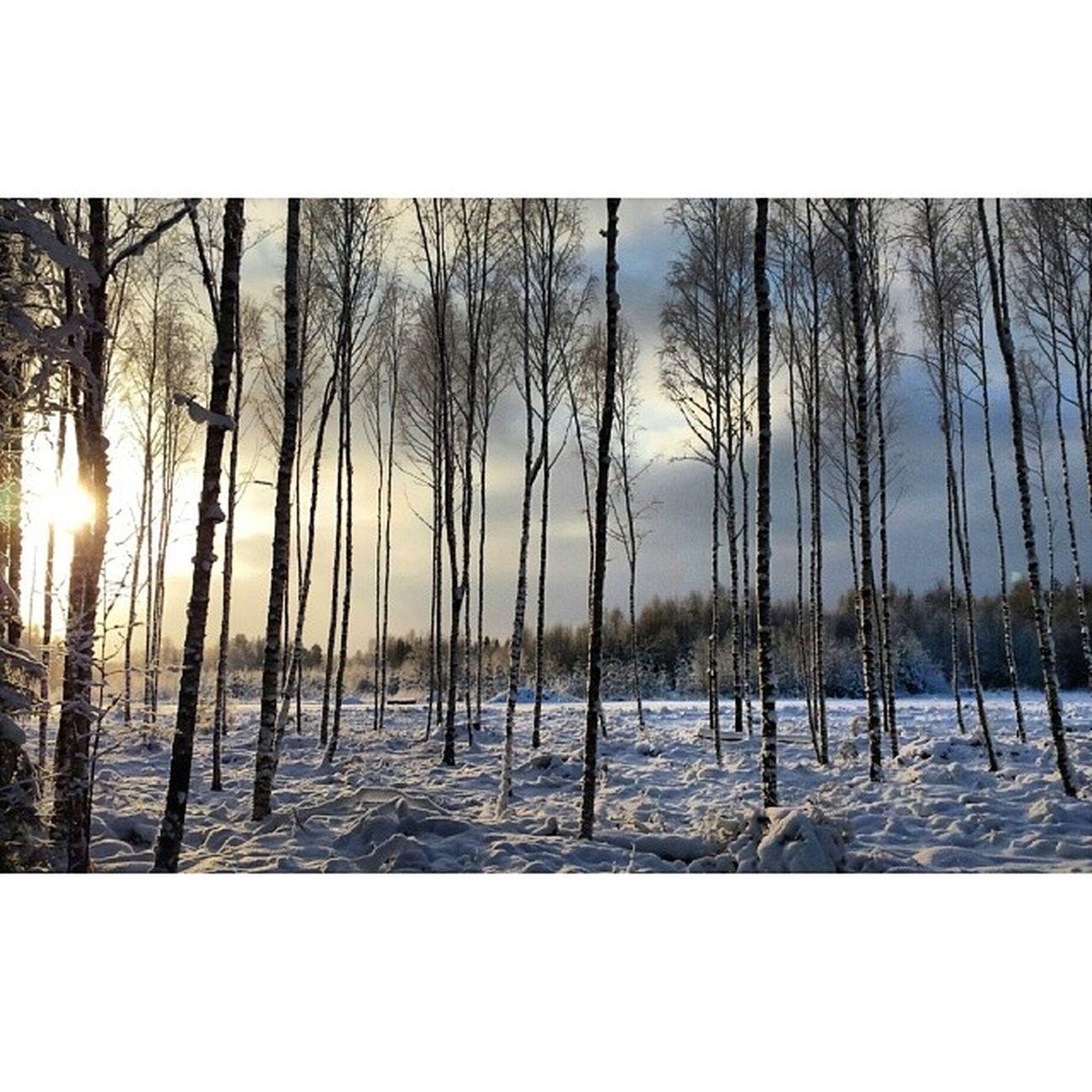 Instadalarna Dalarna Vinter Hjortnäs Träd