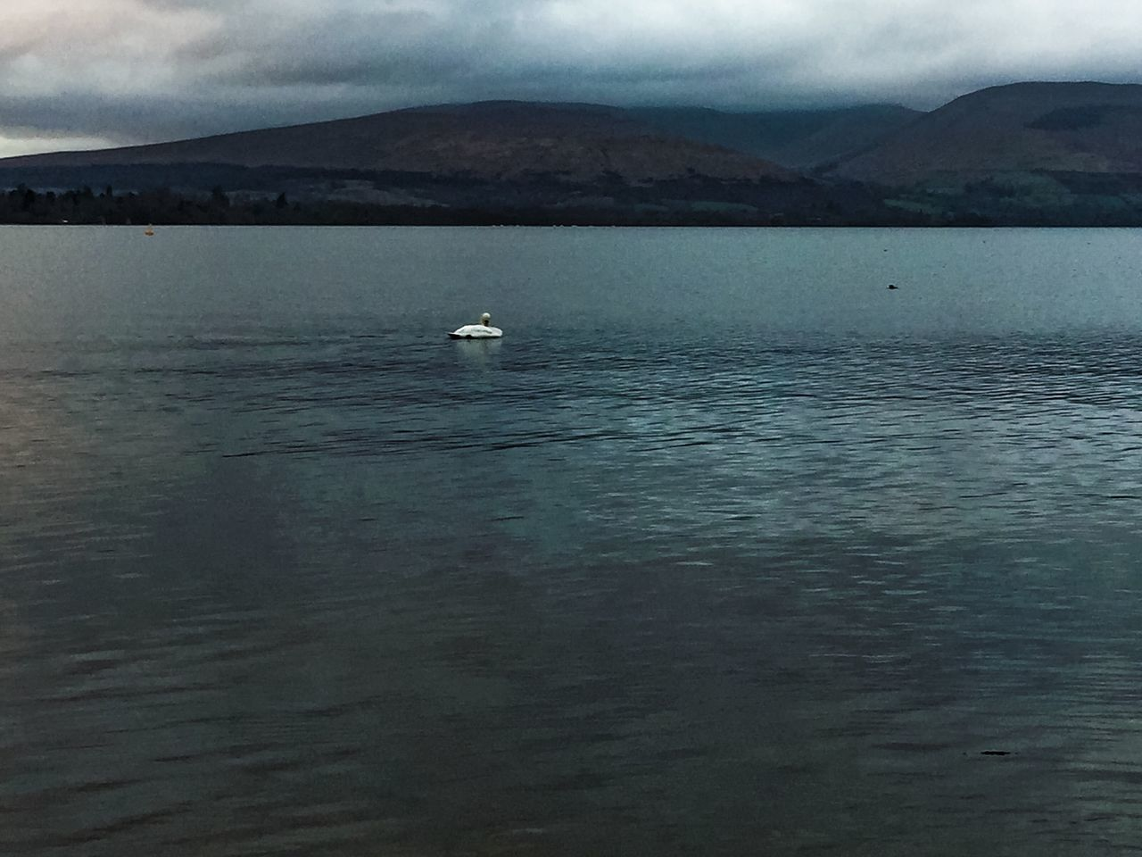 Today In Scotland Idyllic Beauty In Nature Mountain Range Bird Water LochLomond Sky Nature Tranquil Scene Swan Clouds And Sky Outdoors Day No People Tranquility Remote Non-urban Scene